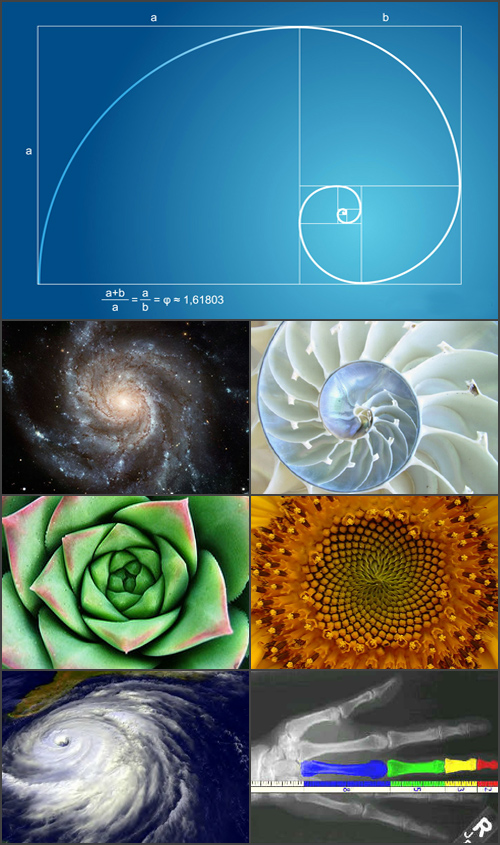 The Golden Ratio is found throughout nature